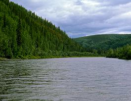 fortymile river alaska