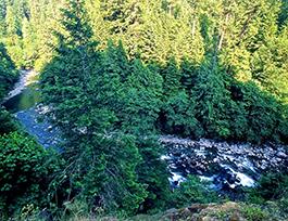 Quartzville Creek Oregon